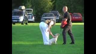 Bull Terrier Miniature Defence