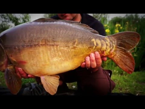 Crowsheath Fishery Short Promo Video 2016