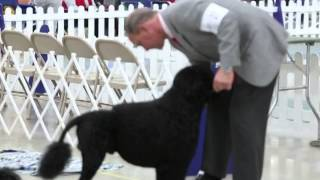 West Michigan Harvest Cluster Dog Show comes to Kalamazoo