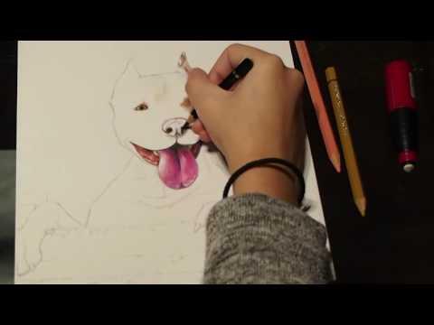 Pitbull drawing (timelapse)