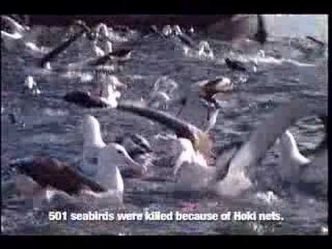 The Truth About Bycatch