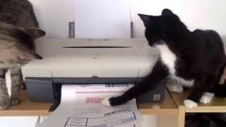 Printing of RENT e-tickets... :-)