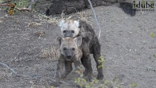 The Other Hyena Den 3