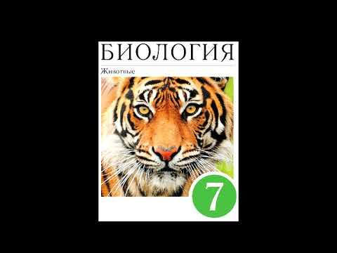 § 22 Класс Хрящевые рыбы