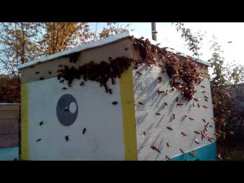Напад пчел Как не допустить
