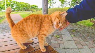 公園のベンチに茶トラ猫がいたので隣に座ってナデナデしてきた