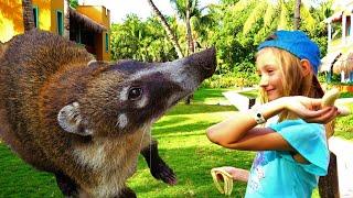 Video para niños sobre animales. Pauline conoció a un coatí y un mono gracioso.