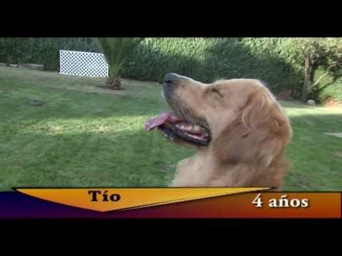 Un perro en la ciudad - Documental
