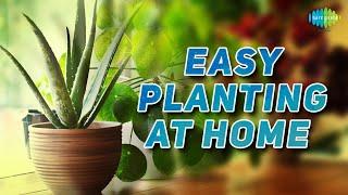 Easy planting at home Nani maa ke nuskhe Saregama Podcast