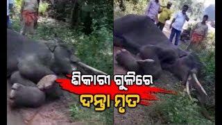Elephant Shot Dead By Hunter In Narasinghpur