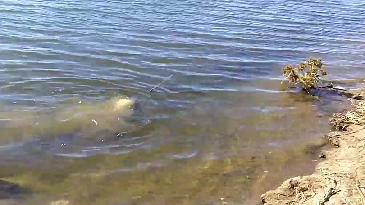Fishing at lake perris shot with kodak zi8 youtube for Lake perris fishing report