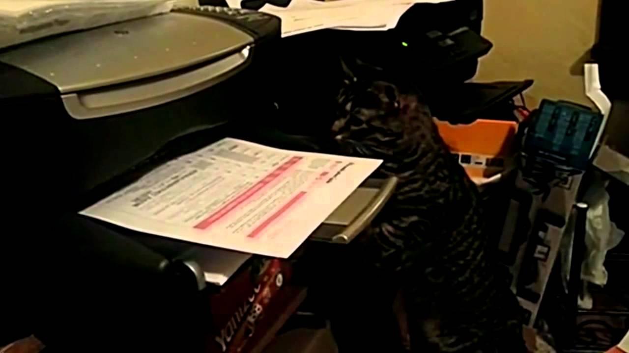 cat sends urgent fax