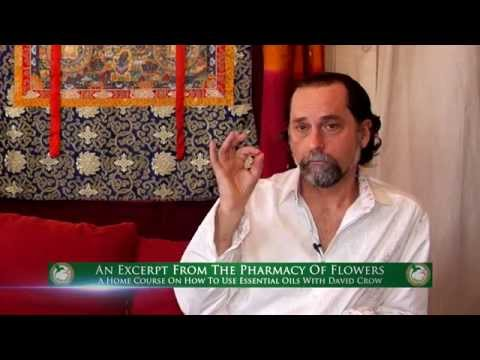 In Search Of The World's Finest Helichrysum Essential Oil With Floracopeia's David Crow, L.Ac.