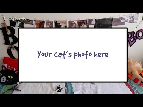 Would you like to have your cat featured in a Lucky Ferals video?