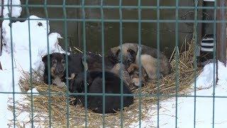 Есть ли будущее у Ногинского приюта для безнадзорных животных?