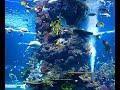 موسيقى هادئة تأخدك في رحلة إلى أعماق البحار لرؤية أجمل الأسماك المرجانية
