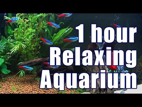 1 hour relaxing tropical fish aquarium ( no music )