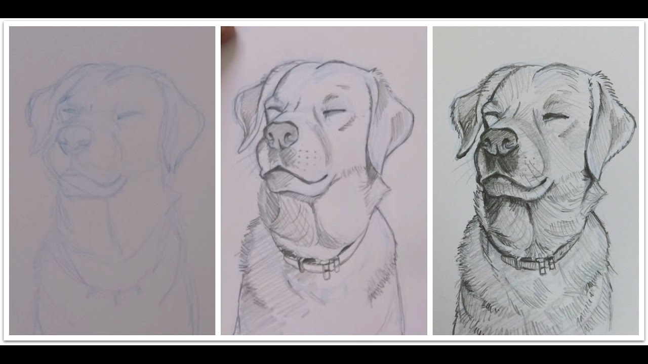 Drawing An Adorable Dog With Pencil Shading Time Lapse Live Drawing