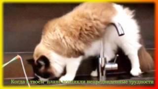 Смешное видео о животных Для детей и не только.Создай себе хорошее настроение