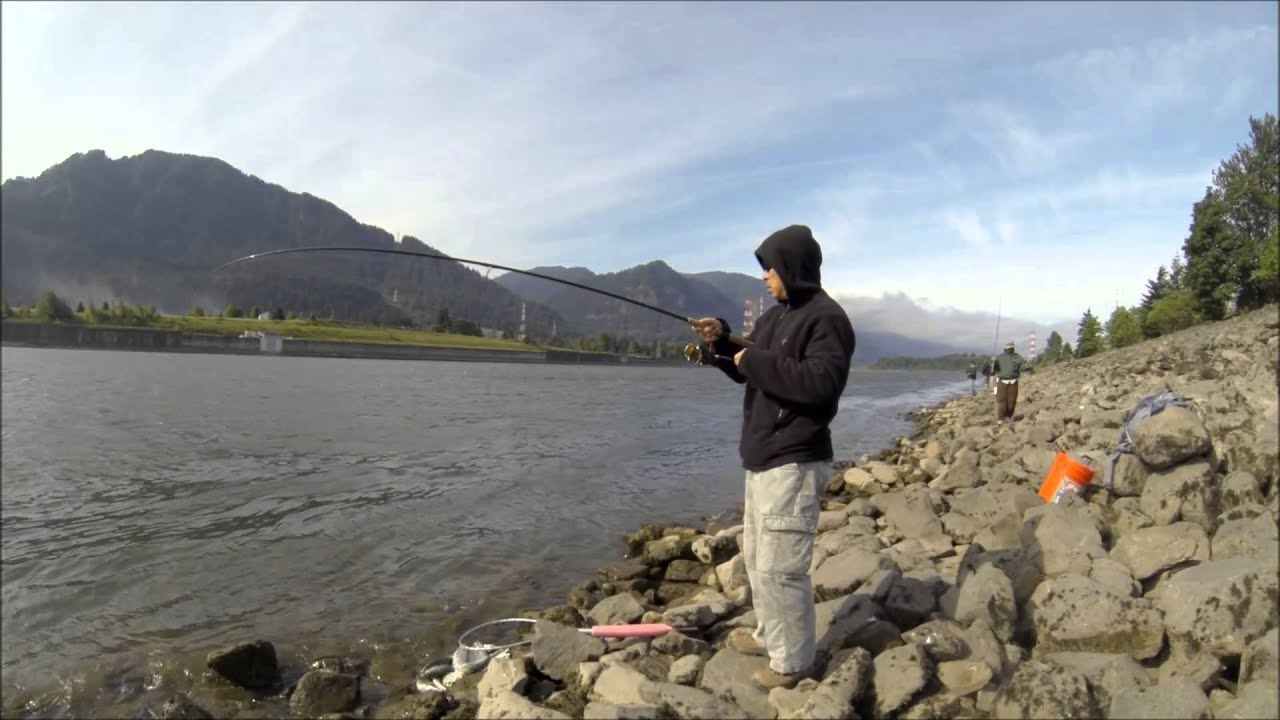 Shad fishing at bonneville dam youtube for Bonneville dam fish count