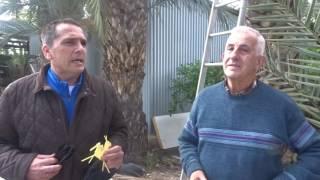 Visita al viviero y fábrica Hermanos García Magallón. Elche, 25 febrero 2017 (1)