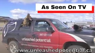 As Seen On Tv, About Unleashed Potential K9, Dog Training Service Interview With Duke Ferguson