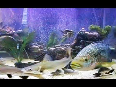 Freshwater fish tank part 1 youtube for Fish tank sharks