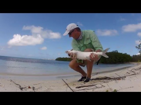 Pesca A Mosca A Los Roques Di Bonefish In Solitaria Fly Fishing By Itself Without Guide