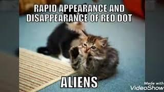 Funny Cats《 MEMEs》#1
