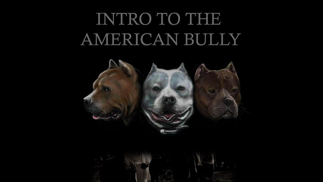 Intro to the American Bully, History of the American Bully