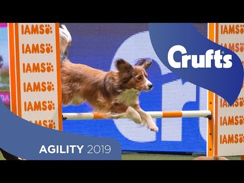 Young Kennel Club Agility Dog of the Year | Crufts 2019
