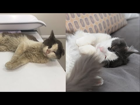 Morgen - Over 500,000 Homeless Cats Roam NY Streets.  This is Teddy's Story.