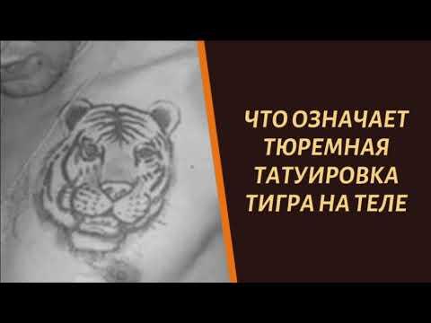 Что означает тюремная татуировка тигра на теле зека?