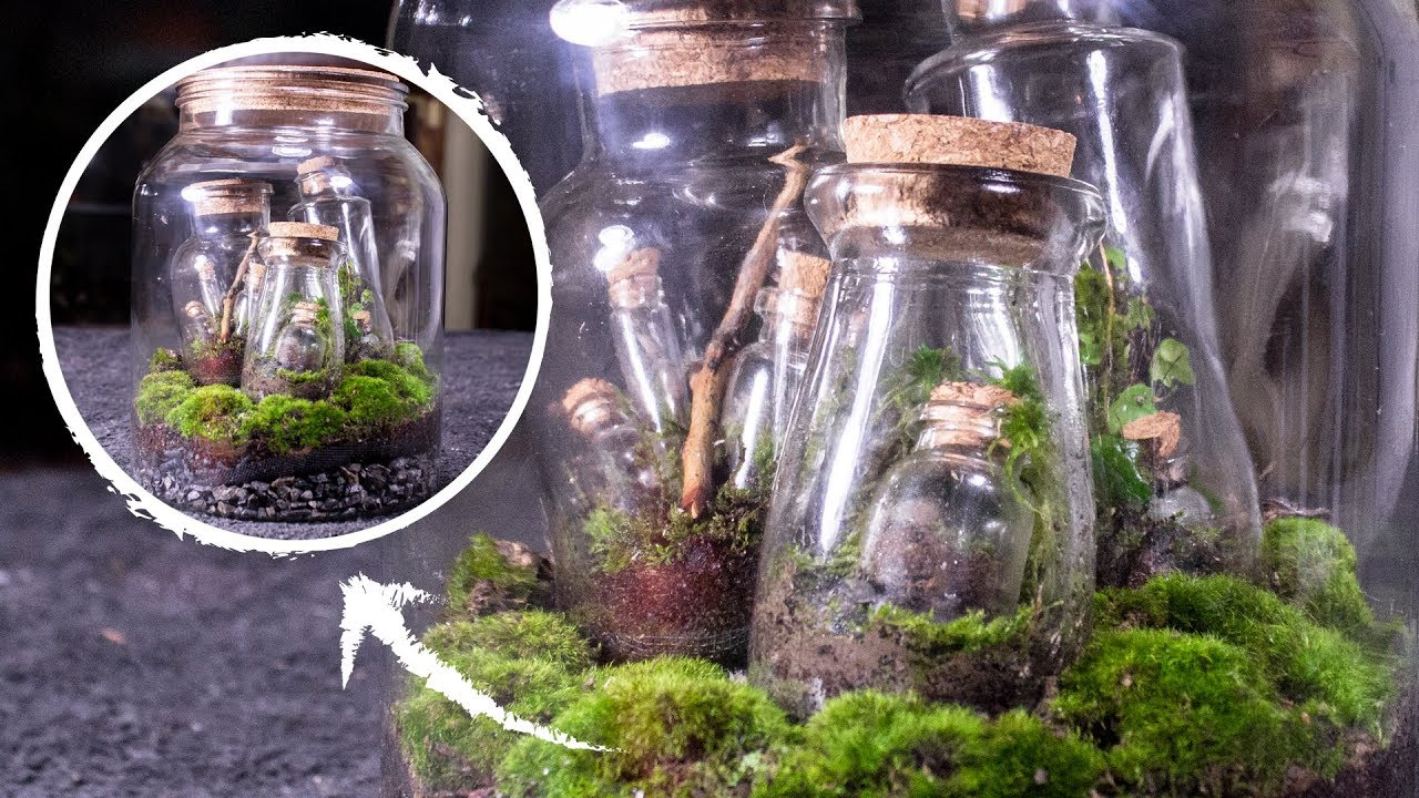 Putting Terrariums In A Terrarium S Terrarium Terraception Youtube