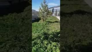 Экспо 2017 / Expo 2017 - Зеленые технологии