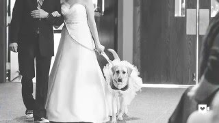Photo of bride and service dog is capturing our hearts