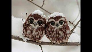 【癒し】動物で癒されてみては?フクロウの癒し系の画像ですかわいい 【...