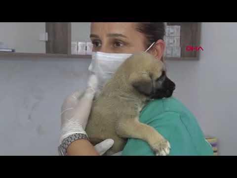 Kuyuya atılan 4 yavru köpekten sadece biri kurtarılabildi