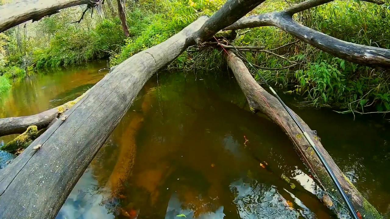#12 • Ловля плотвы тенкарой на муху на маленькой лесной речке. Рыбалка в Подмосковье