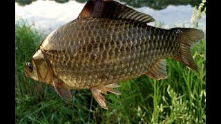 где порыбачить на Урале Рыбалка на карася в Курганской области