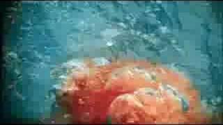 Moshi Moshi Sushi - Jaws