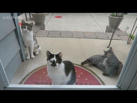 Feral Cat And Kittens Waiting By The Back Door Again