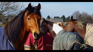 Лошадиные будни домашних животных, Германия, Европа!