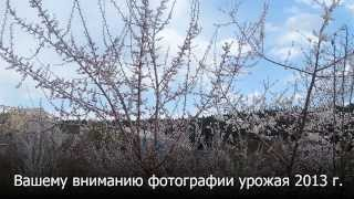 Слайд-шоу сада Валерия Железова. Урожай 2013