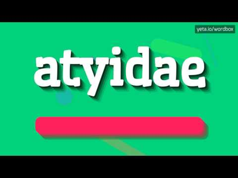 ATYIDAE - HOW TO PRONOUNCE IT!?