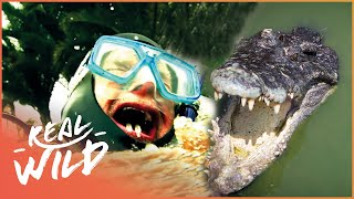 Angry Alligator Attacks On The Water's Edge! | Human Prey | Real Wild Documentary
