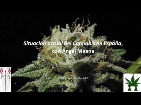 Situación actual del cannabis en España, con Ángel Meana (Llerbastur)