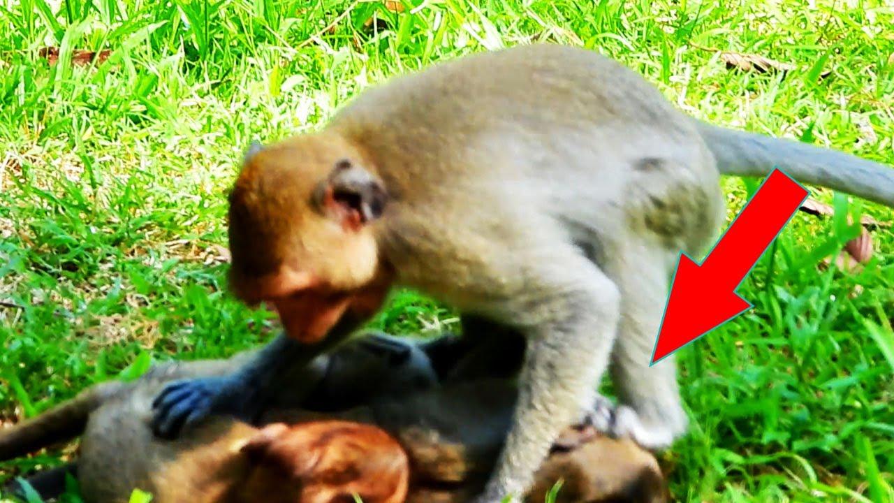 Monkey Jannet is a gangster girl now