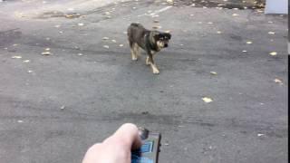 Отпугиватель собак СОБАКАМ.НЕТ ПРИМЕНЕНИЕ