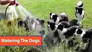Dogs Love Hose